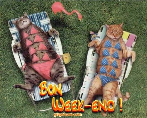 bon-weekend-chats