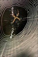 Araignée matinale.