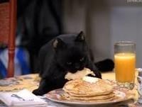 chat noir dessert