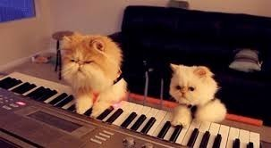 chatons clavier