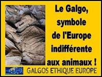 GALGOS--LE-SYMBOLE-DE-L-EUROPE-INDIFFERENTE-AUX-ANIMAUX