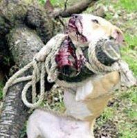 horreur et barbarie humaine