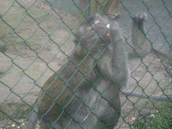 les zoos bof mais.....protegons les!!!