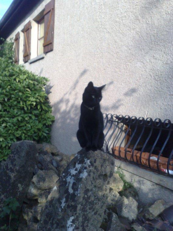 voici chiara chatte noire de mon beau-frère....