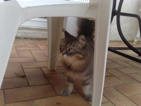 cachée sous la table...