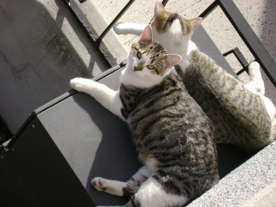 titi et minousse