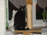 BB sur son arbre a chat....