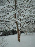 photos-noyer-neige-tns0