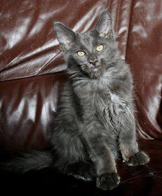 Zeus 4 mois 6