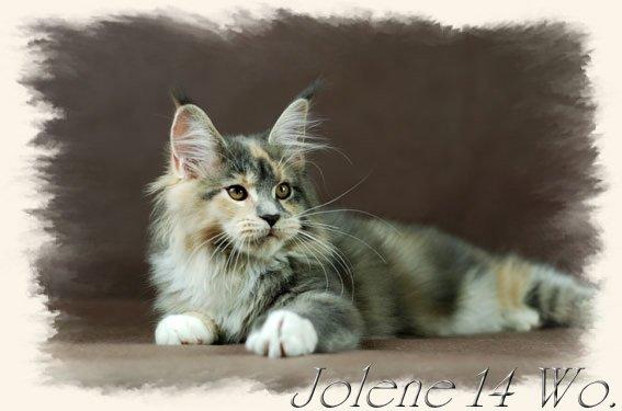 jolene14w1