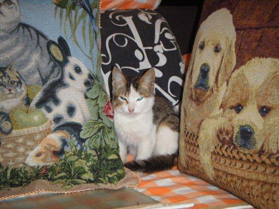 Chat malagache numéro 2