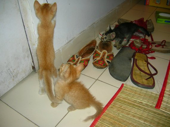 Kittens in India 1 month