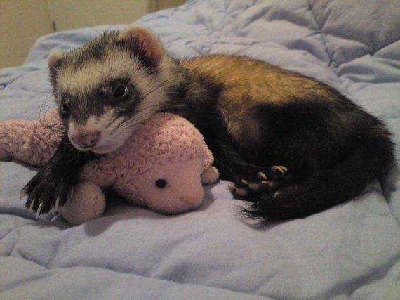 Fifine et son doudou
