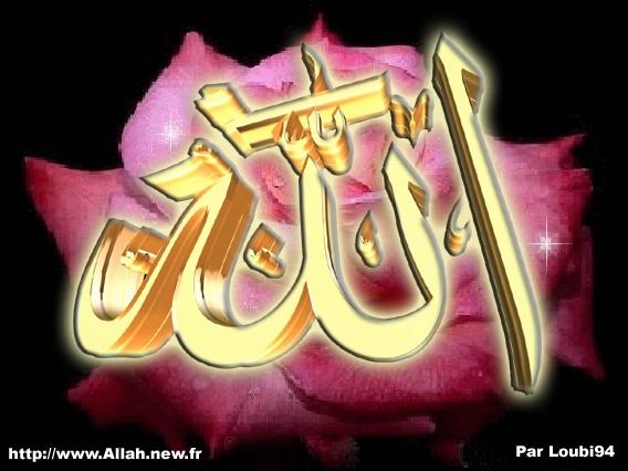 rose-allah-869a5e