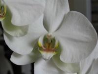mes orchidées - cm