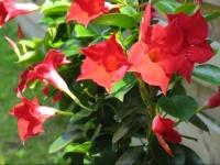 mon jardin - cm