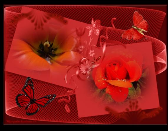 belles fleurs Hélène