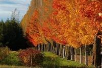 automne Québec ♥