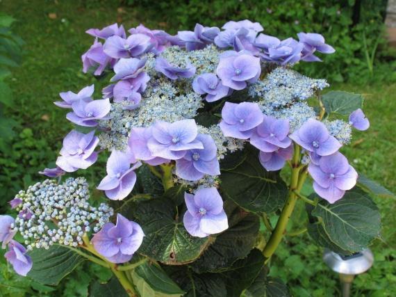 fleur jardin