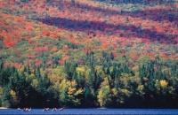 automne Québec 33