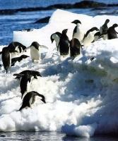 croisiere_antarctique