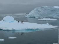 antarctique-manchot