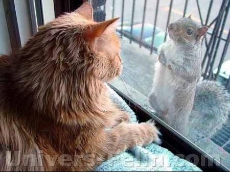 big_1047_cat_squirreljpg