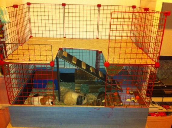 cavy cage