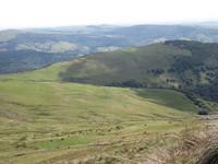 vue du Puy Violent, troupeau de vaches