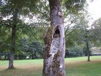 Fontanges, arbre maçonné