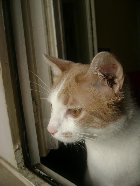 Protection de fen tre pour chat chats forum animaux for Protection fenetre pour chat