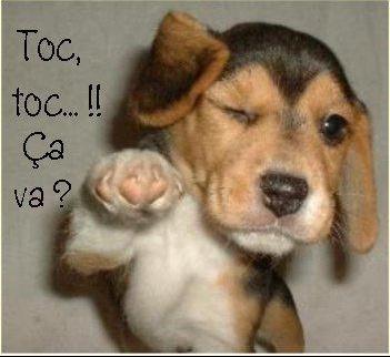 Toctoc