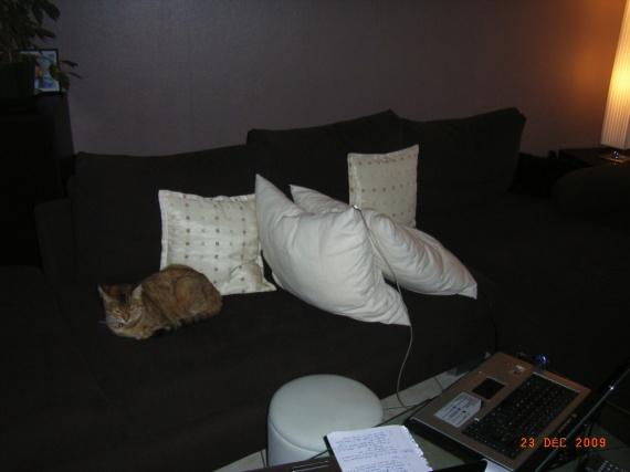 Cohabitation Filou et Blinky 008