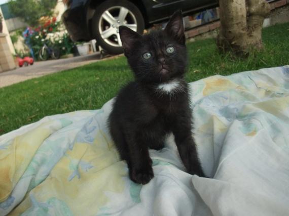 cherche pr nom pour chaton noir chats forum animaux. Black Bedroom Furniture Sets. Home Design Ideas