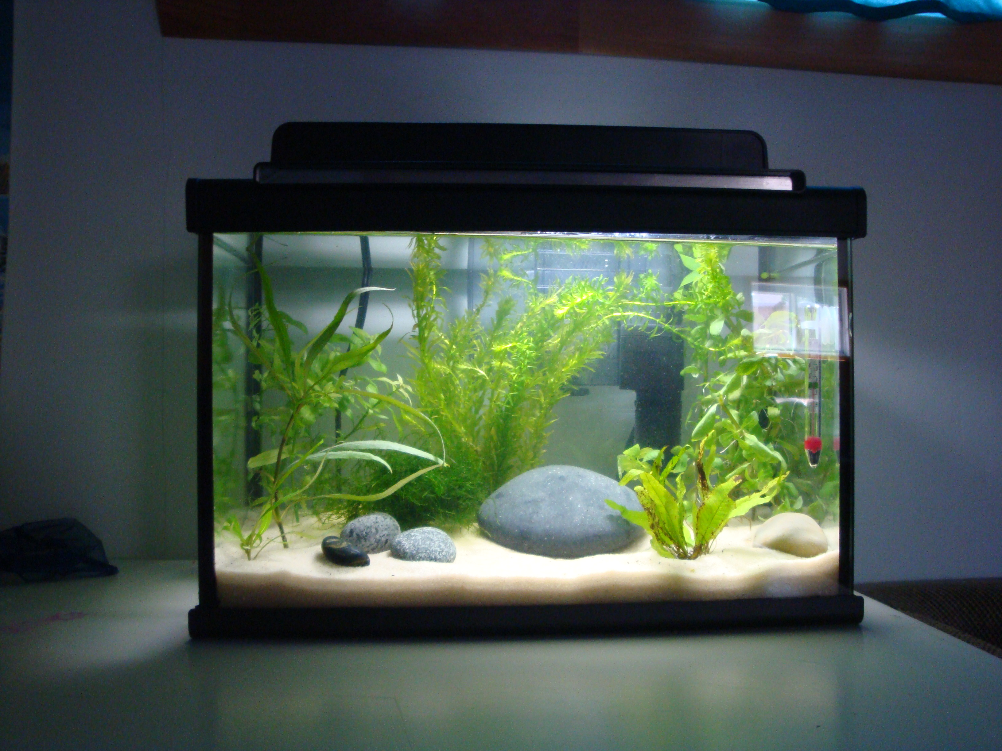 Id e d co aquarium 20 l for Deco aquarium