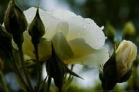 ♥ ♥ Les bouquets d'Amour ♥ ♥