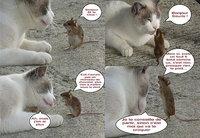 Le chat et la souris.
