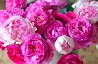 Femme.... rose...