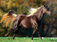L'élégance d'un cheval !