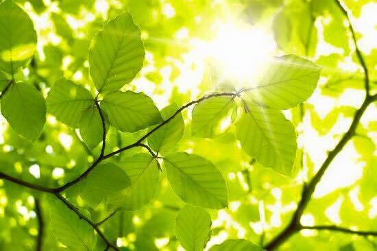 Plante un arbre vert souricette doctissimo for Plante un arbre