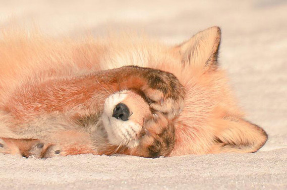 cute-animals-hokkaido-ezo-japan-11