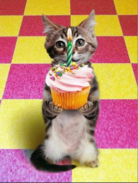 chat_anniversaire_br