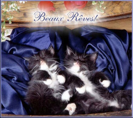 beaux%20reves%201%20(chat)