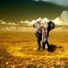 elephant%201