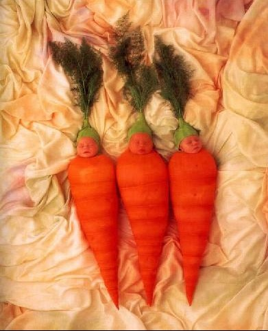 carottes%201