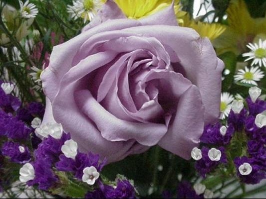 rose-violette-7589494e7