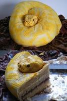 Gâteau serpent