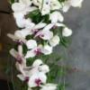 Bouquet mariée orchidée, ruscus, asparagus, beargrass, perles