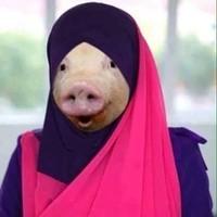 porc voile