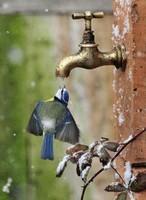 hiver oiseau